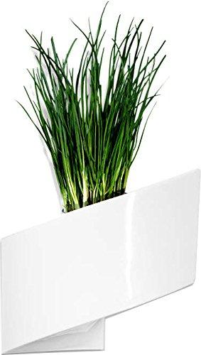 vaso per parete